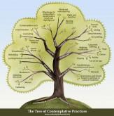 עץ פרקטיקות קונטמפלטיביות